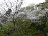 07_spring_013