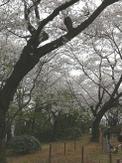 07_spring_024